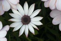 Natur / flores