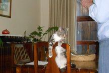 katte / katte