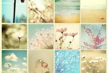 Flowers / by Gabriella Dehod