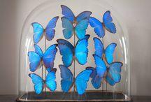 Butterfies <3