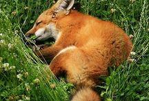 Zwierzęta / Zwierzęta zamieszkujące różne środowiska