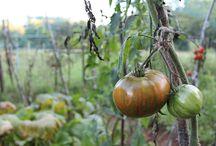 http://ortolanoa30anni.blogspot.it/ / Blog di Orticultura, Orto e Giardinaggio