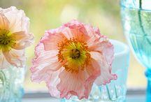 Flower Power / by Dee Vine