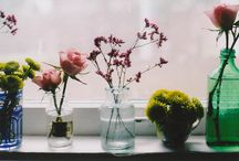 Flowers  / by Lauren Murray