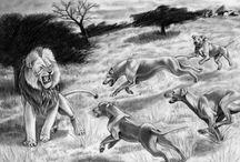 The Wondrous Rhodesian Ridgeback