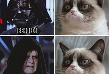 Grumpy Cat / A celebration of all the things Tard. / by Corianne Wilson
