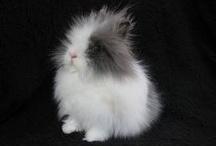 Konijnen/Rabbits