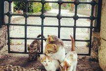 Chats - Cat