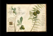 Botanical Notebooks / Nature. Art.