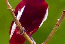 Oiseaux merveilleux