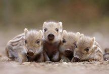 Poze dragute cu animale