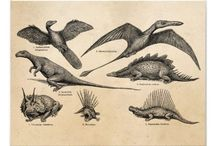 Vintage prehistoric zoology illustrations