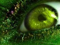 groene sjizzledemizzle