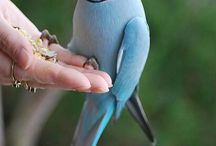 kuşlar**