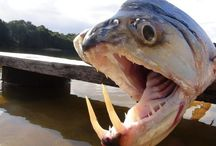 Scary Animals Mouths