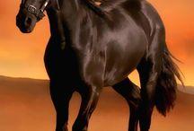 μαυρο αλογο