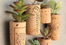 Małe ,fajne roślinki