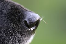 Dog Noses and Baby Feet / The two cutest things ever (I'm sure a cat, and other noses will show up too) / by Andrea Swinney
