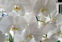Florists | Sydney Lane cove