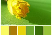 Color Palettes / color inspiration for designs.