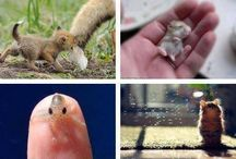 Animals that janesse wants / by Maria Suazo