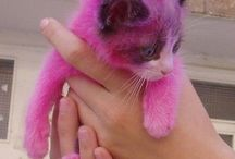 I just love cats! / I just love little kitties with their wittle paws and their wittle whiskers :) / by Mandy Onder