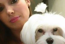 Emma / Maltese, dog