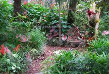 Garden - in Florida