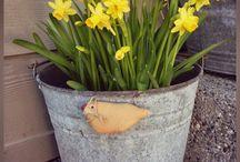 Ogródek Wielkanoc