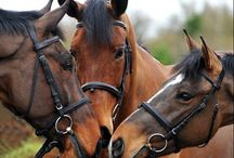 Horses / Wild, beautiful animals...
