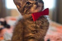"""""""TOP CATS"""" (Never go away!)"""