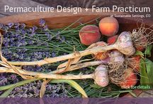 Permaculture Plus! / permaculture: a revolution disguised as gardening / by ♫♀✌♥ Renee Beanie ☮☽O☾ ❀ ❋ ❁