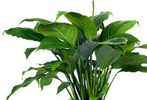 Top 5 Air-Purifying Plants