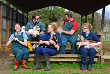 CVM- Teaching Animal Unit / The CVM main campus is located on 180 acres near downtown Raleigh and is unique among veterinary colleges with an on-site working farm.