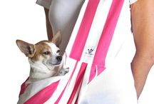 Chihuahua Molly