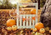 Fall / Autumn Digital Backdrops / Backgrounds / Fall / Autumn Digital Backdrops / Backgrounds  Pumpkin Stand Orange Flags Outdoors Digital Downloadable Fall Autumn Backdrop Background Prop Scene Baby Child Toddler JPG files PSD files