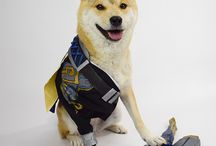 overwuach dogexD