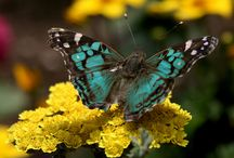 Colors ~ Turquoise and Yellow