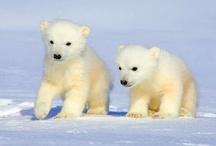 Arctic: Polar Bear Cups