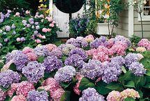 gardening / by Karen Woodford