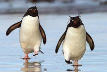 ...  And penguins too