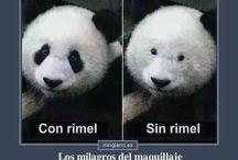 chistes/memes
