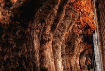 Los árboles son vida 2 / Árboles vida  Rocío  / by jose alonso