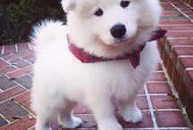 Pies najlepszy przyjaciel człowieka♡