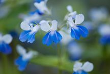 Цветы - Flowers