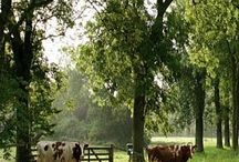 I love country life♡♡