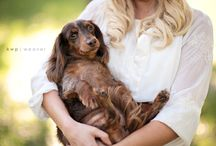 Photography {Pets} / by Ashley Breor