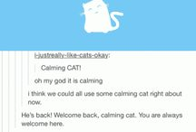 calming cat and other amazing things