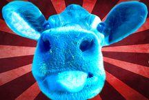 Art of the Cow / Artistic interpretations of cows