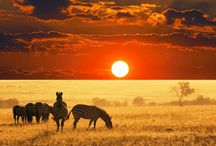 Sunsets from around the world / We love sunsets and want to share our memories with you.